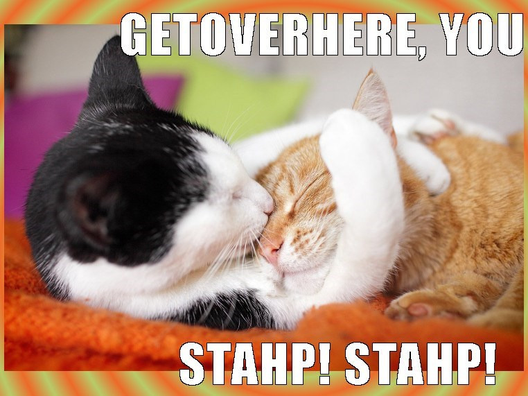 Cat meme of one cat putting the other in a loving choke hold,