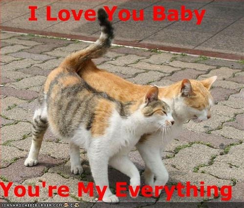 I Love You Baby You're My Everything - Cheezburger - Funny Memes | Funny  Pictures