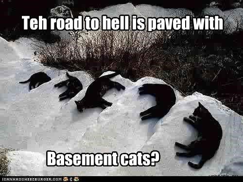 Teh road to hell is paved with Basement cats?
