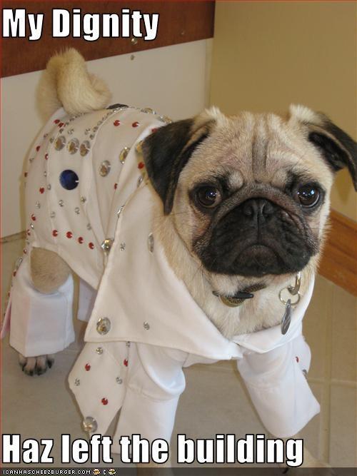 costume dignity Elvis pug - 2842361088
