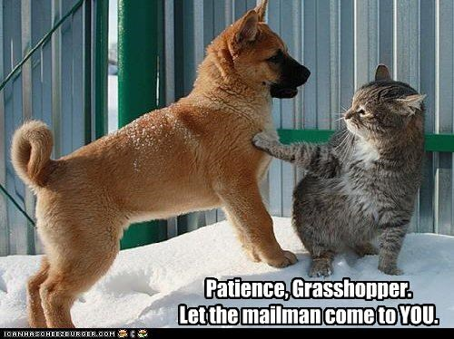 advice helping loldogs patience - 2843608576