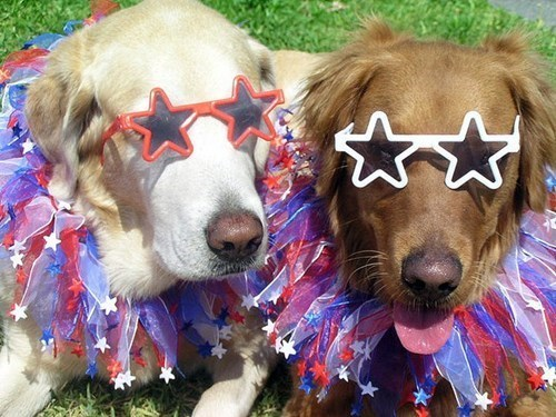 dogs pets list independence day fourth of july safety Cats