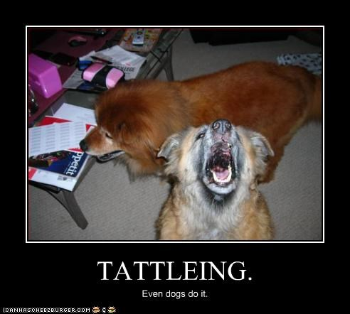 chow tattling - 2844478976