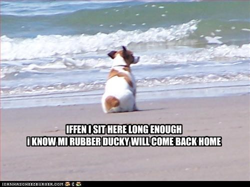 beach,beagle,duck,home,ocean,rubber duck,wait