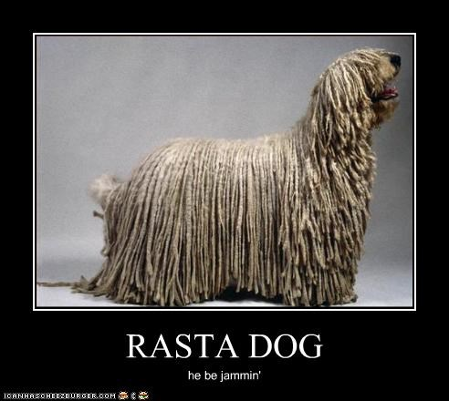 RASTA DOG he be jammin'