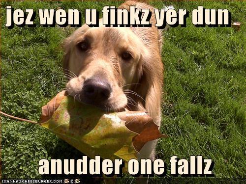 Cheezburger Image 2846588672