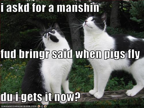 I Askd For A Manshin Fud Bringr Said When Pigs Fly Du I Gets It Now