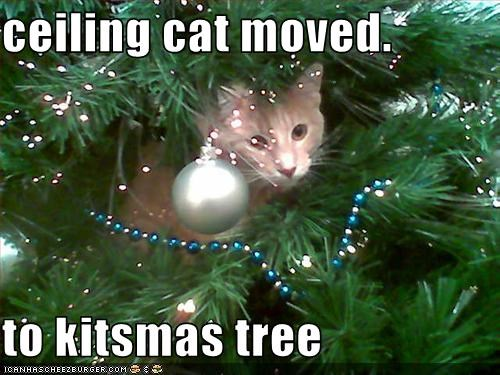 Ceiling Cat Moved To Kitsmas Tree Cheezburger Funny