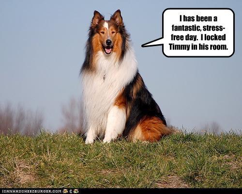 day,free,lassie,sheltie,stress,timmy