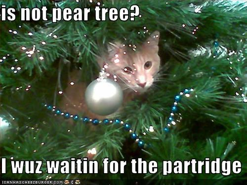 is-not-pear-tree-i-wuz-waitin-for-the-partridge