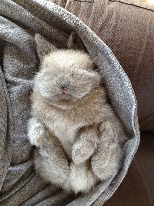a very cute bunny sleeping- cover photo for a list of ute animals sleeping
