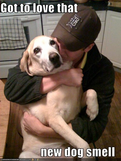 hug,humans,labrador,love,new,smell