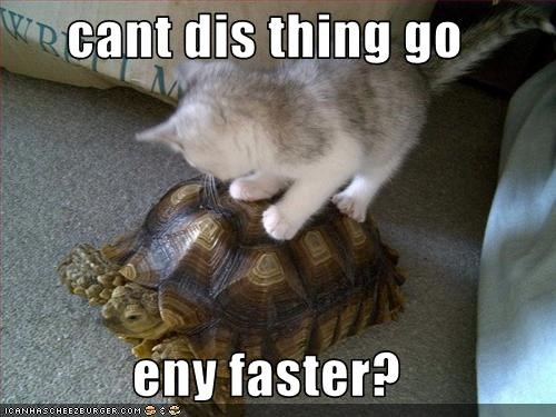 cute,kitten,lolturtles,mount