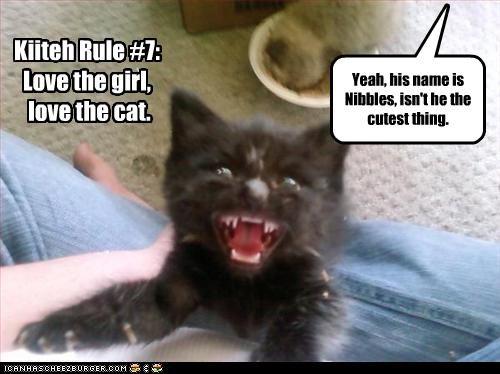 attacking girlfriend kitten - 2850638336