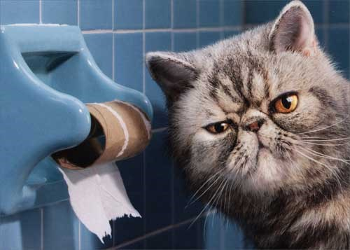angry cat next to finished toilet paper roll