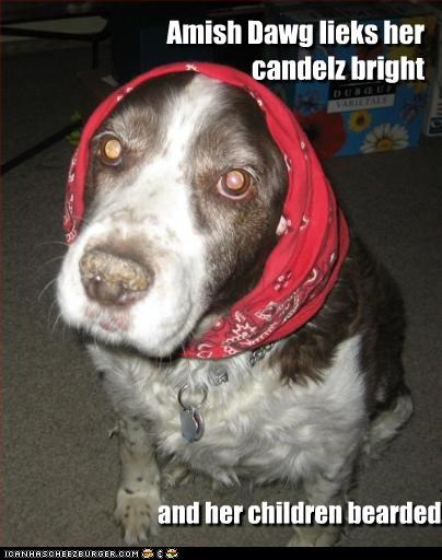 Amish Dawg lieks her candelz bright and her children bearded.