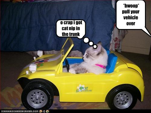 *bwoop* pull your vehicle over Cleverness Here o crap i got cat nip in the trunk