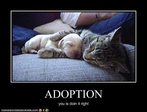 ADOPTION you is doin it right