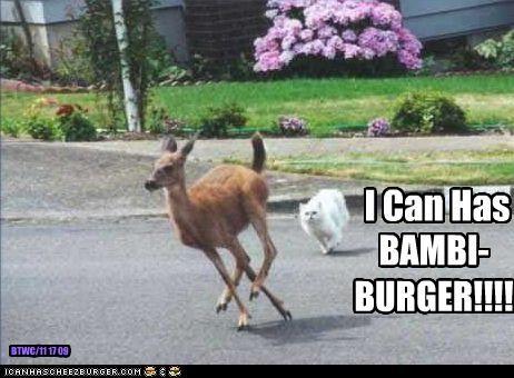bambi cheezburger loldeer murder want - 2853936640