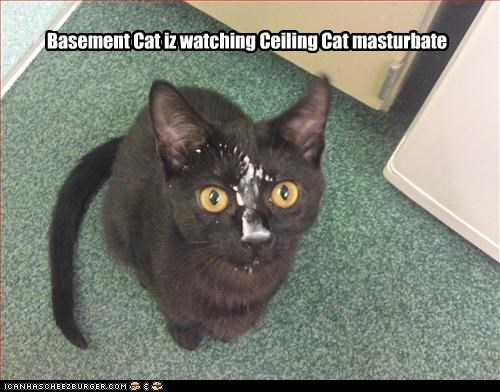 Cat ceiling masturbate watching