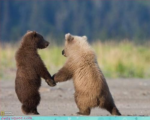 baby bear siblings - 2856410624