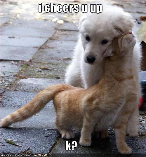 cheer golden retriever happy help lolcats Sad - 2857236224