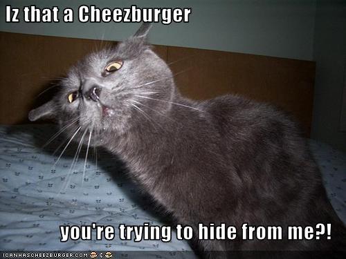 Cheezburger Image 2857502720