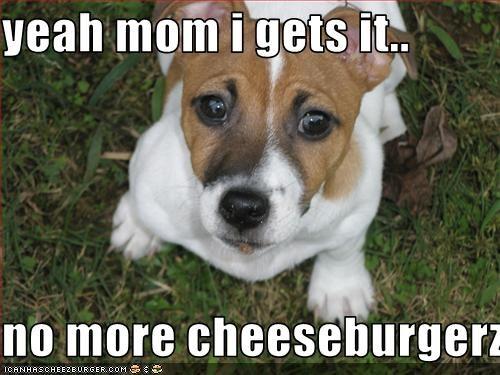 Cheezburger Image 2857778176