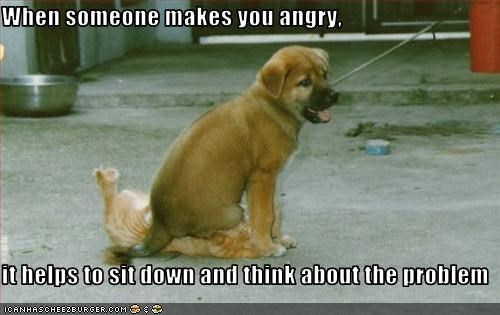 angry lolcats puppy sit think whatbreed - 2860956672