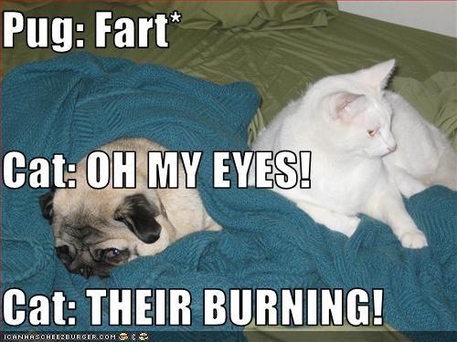 Pug: Fart* Cat: OH MY EYES! Cat: THEIR BURNING