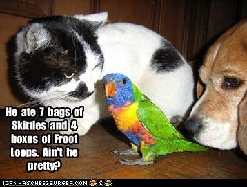 beagle,bird,color,feathers,lolcats
