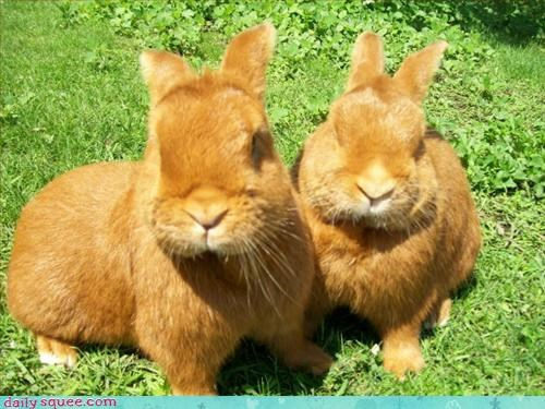 bunnies,green,orange