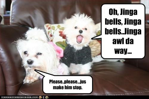 christmas,maltese,please,singing,song,stop