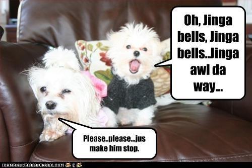 christmas maltese please singing song stop