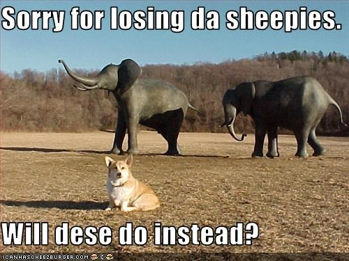 corgi elephant herding sheep sorry - 2864075008