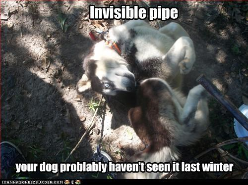 Invisible pipe your dog problably haven't seen it last winter