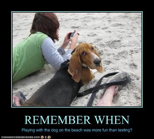 basset hound beach playing remember text message - 2864799488