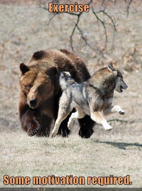 bear,chase,exercise,siberian husky