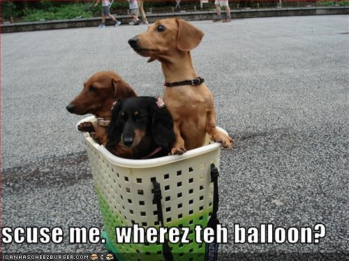 balloon,basket,dachshund,where