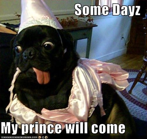 googly eyes,prince,princess,pug,tongue,waiting