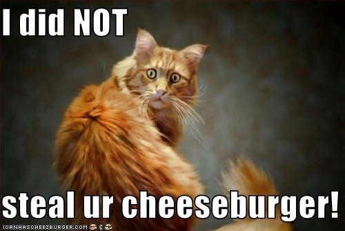 Cheezburger Image 2865644800
