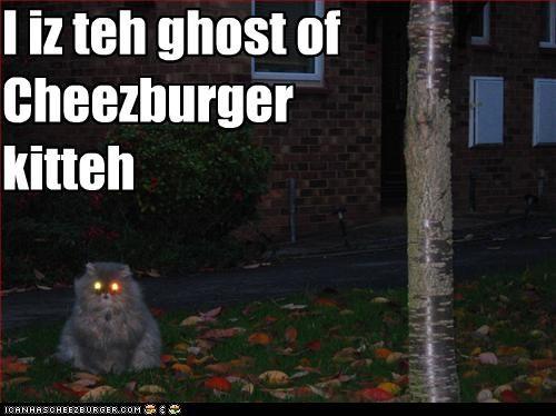 Cheezburger Image 2865944064
