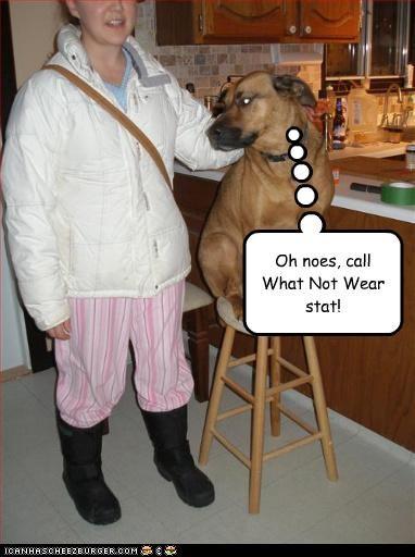 Cheezburger Image 2867126272