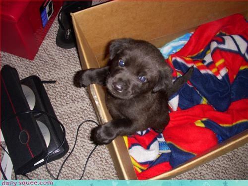 box,dogs,puppy