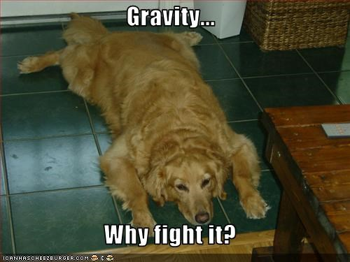 collapse flat floor golden retriever Gravity
