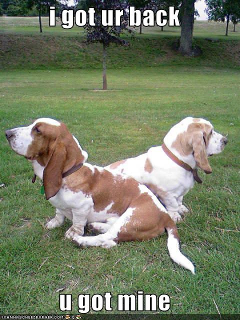 back basset hound friends friendship - 2868267776