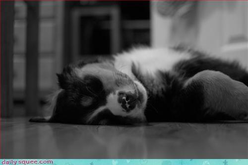 cute sleepy - 2869352704
