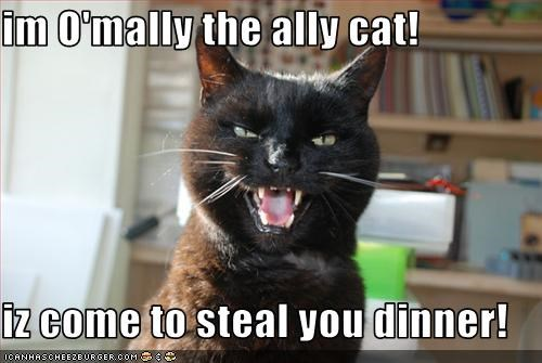im O'mally the ally cat! iz come to steal you dinner ...