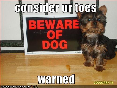 beware of dog toes warning yorkshire - 2870669568