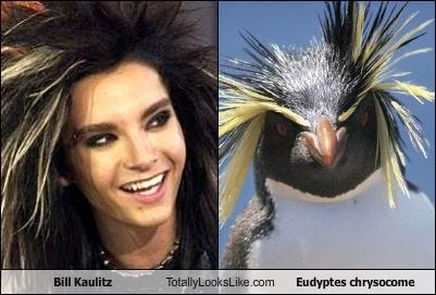 Bill Kaulitz,feathers,hair style,penguins,Tokio Hotel